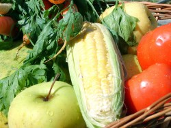 Vegetable Series (Part 3): How to Ensure Your Family Gets the Right Vegetable Variety