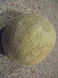 a light-colored cantaloupe on the kitchen counter