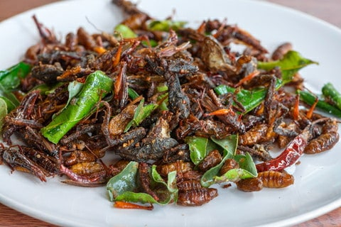 http://www.dreamstime.com/royalty-free-stock-photography-fried-edible-insects-mix-white-plate-green-lime-leaves-regional-delicacies-food-thailand-image41234117