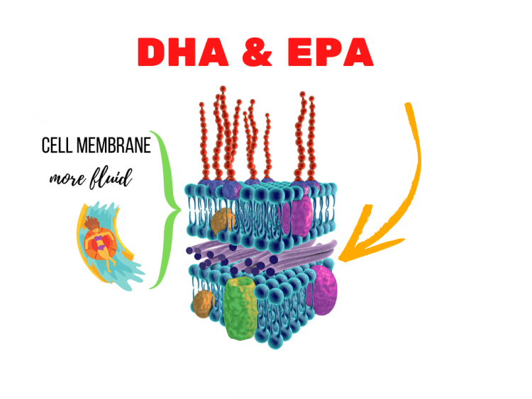 a cell membrane and the example of a waterslide to show fluidity