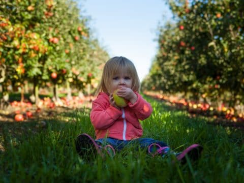 Parents of Picky Eaters Unite: Is the One Bite Rule the Answer?